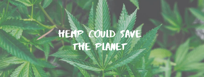 Hemp Could Save the Planet