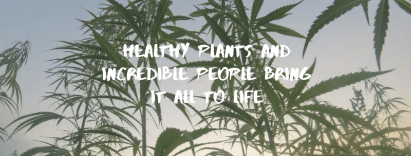 Healthy Plants and Incredible People Bring It all to Life