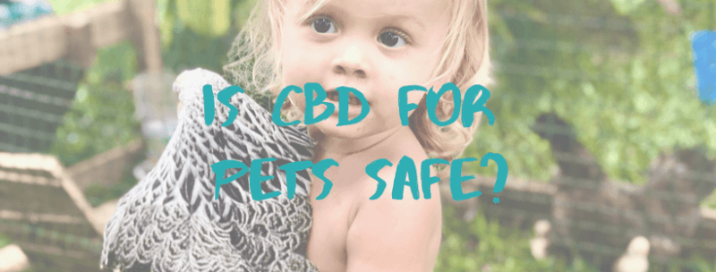 Is CBD for Pets Safe?